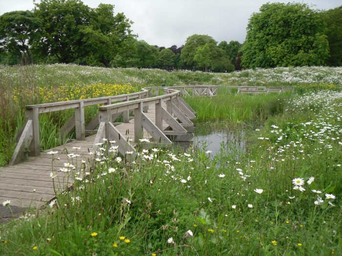 Wetland at Beveridge Park Fife by Water Gems complete, wildflowers in bloom and area open to the public