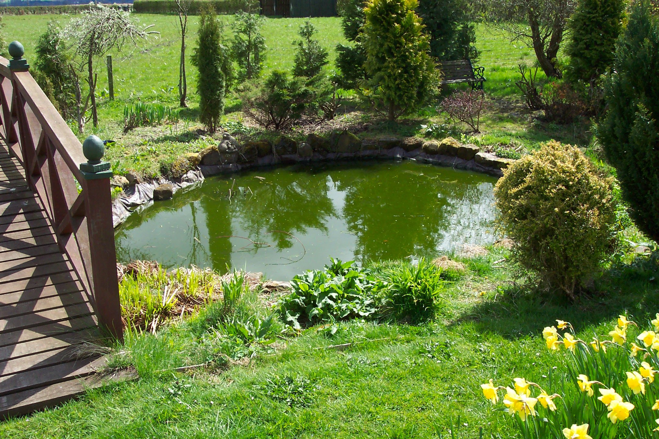 A pond with seriously green water. This is likely to have almost no oxygen in it at night in the summer.