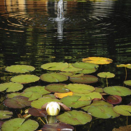 Jupiter Artland formal water feature, consultation work, pond construction, Water Gems
