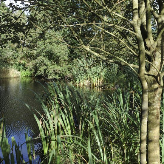 Little Sparta, Water Gems, remedial work, pond cleaning and maintenance