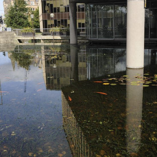 Golden Orfe in Lloyds TSB water feature, Water Gems, pond cleaning and maintenance