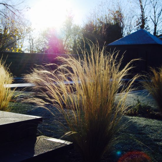 Stipa tenuissima in Edinburgh garden built by Water Gems, designed by Carolyn Grohmann