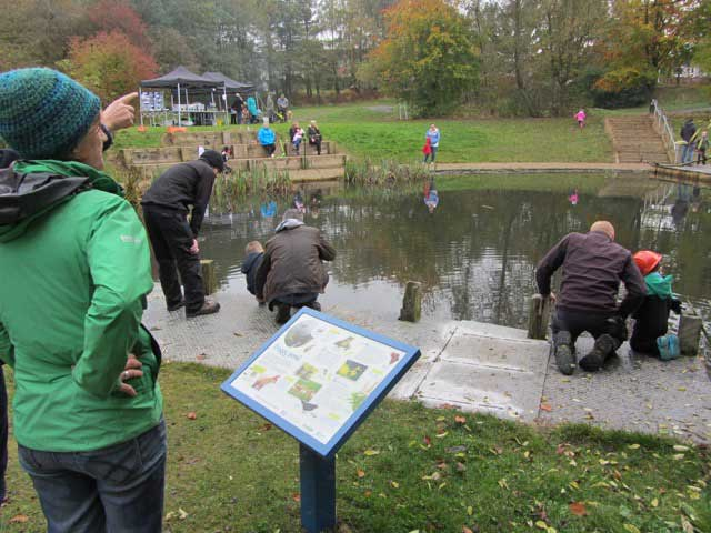 Froggy Pond Makeover by Water Gems Edinburgh
