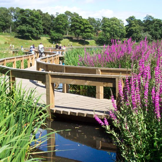 Inverleith Park Pond finished and open to the public, biodiversity gains evident