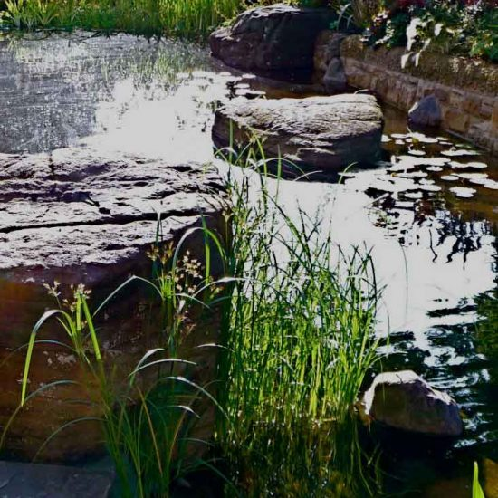 Swimming pond, Garden in Inverleith, Edinburgh by Water Gems