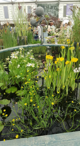 Waterside Nursery