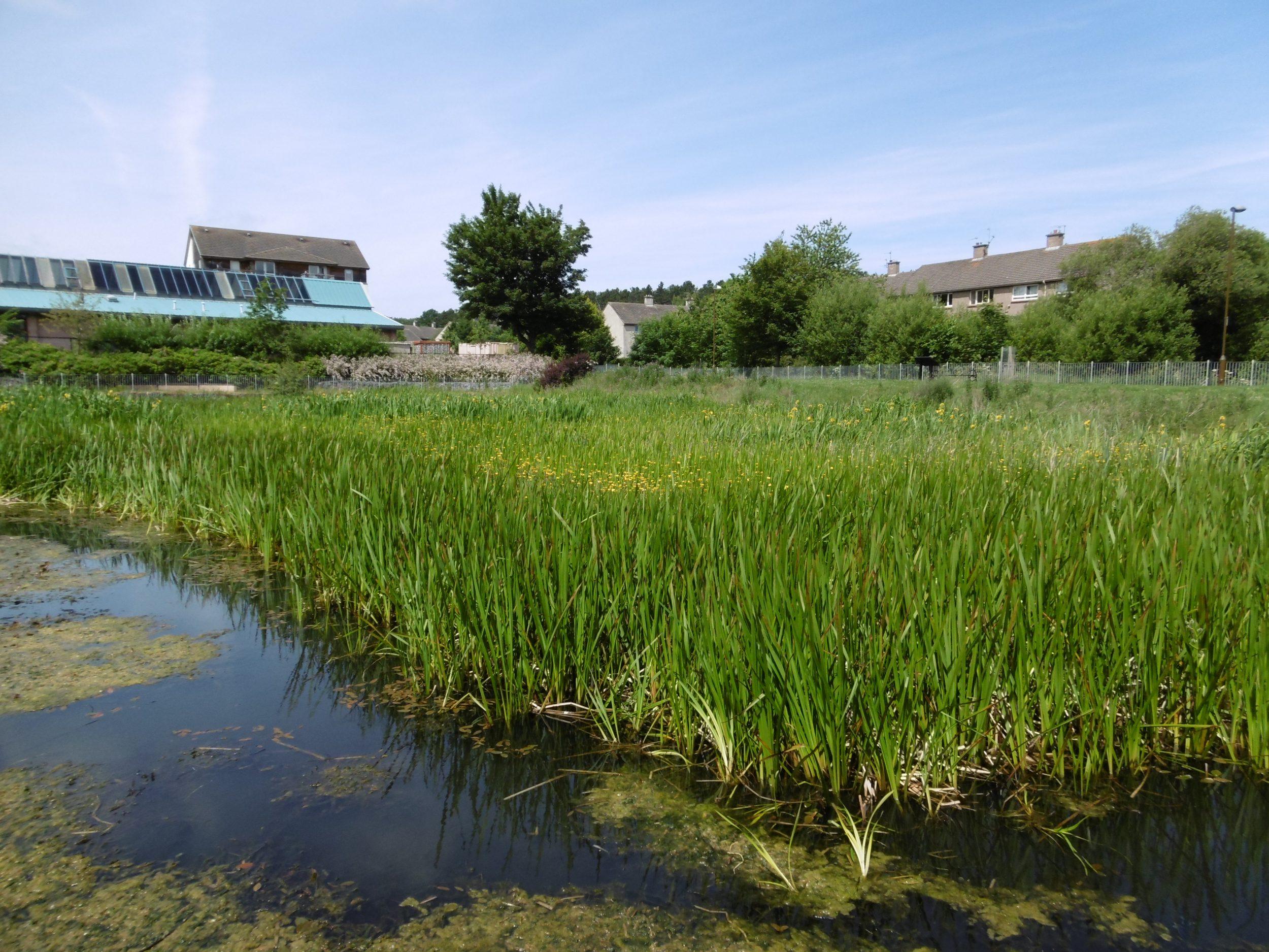 Oxgangs SUDS pool wetland